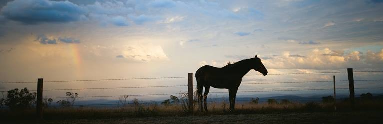 Kingaroy Horse Southern Queensland Country